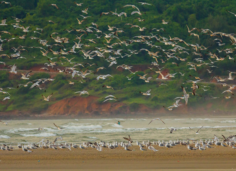 Gulls&Terns-areybeach